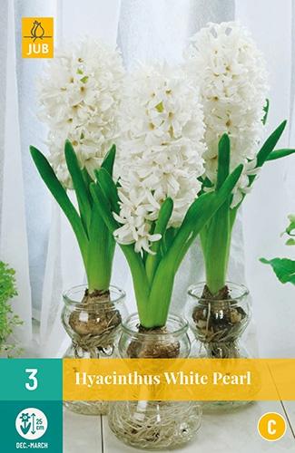 Hyacinthus White Pearl - Hyacint voor kamercultuur