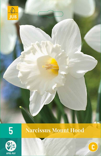 Narcis Mount Hood - Narcissus
