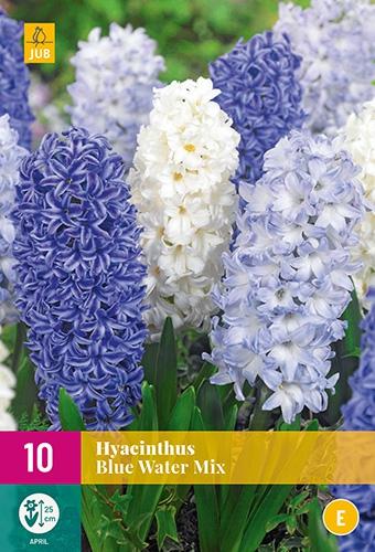 Hyacinten Blue Water Mix - Hyacinthus