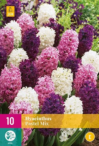 Hyacinten Romantische Mix - Hyacinthus
