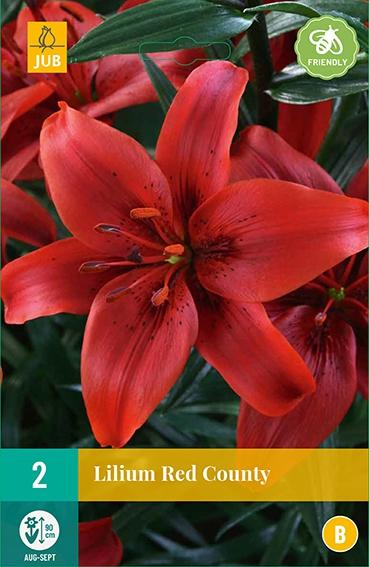 Lilium Asiaticus Rood