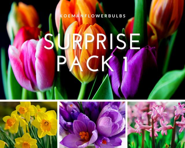 Bloembollen Surprise pack 1