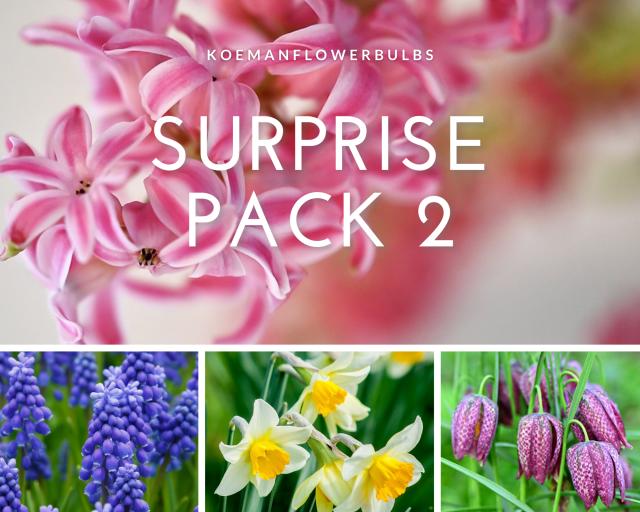 Bloembollen Surprise pack 2