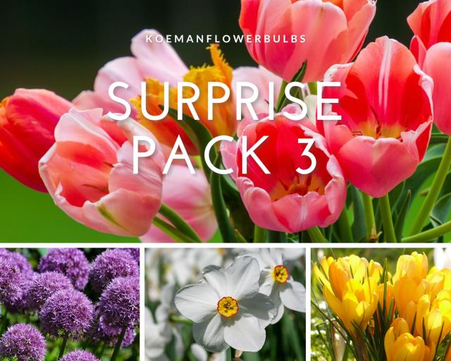 Bloembollen Surprise pack 3