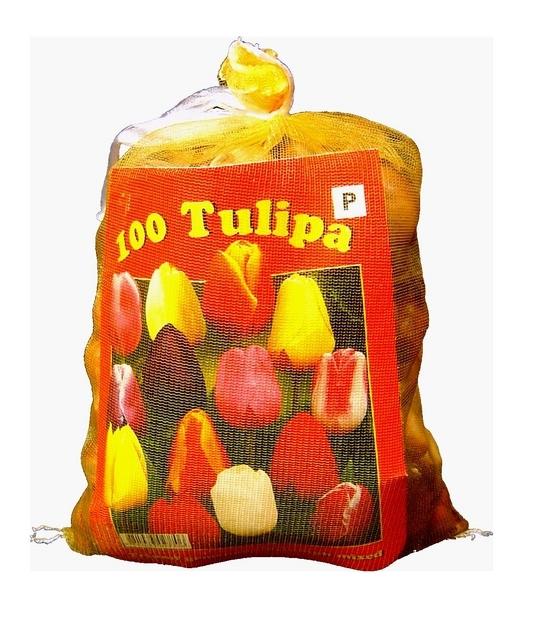 Tulpen Darwin Mix (XL-Verpakking)