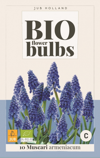 Muscari Armeniacum - Bio Flower Bulbs