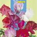 allium giganteum planting instructions