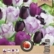 Tulpen Purple Passion Mix