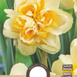 Narcis Peach Cobbler - Narcissus