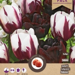 Tulp Kyra Mix