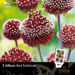 Allium Red Mohican - Sierui