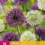 Alliums Paars & Wit Mix